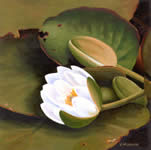 White Lilly, oil painting