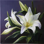 White Lily, oil painting