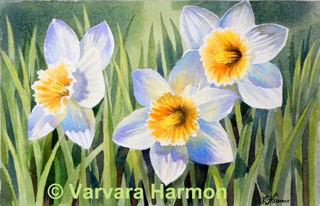 Daffodils, Floral watercolor painting by Varvara Harmon