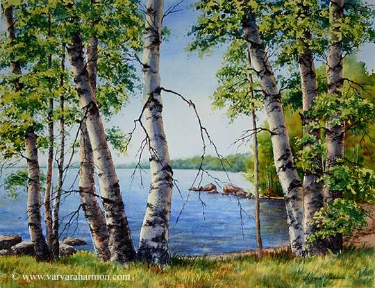 Birch Trees on Long Lake, Original Landscape watercolor painting by Varvara Harmon