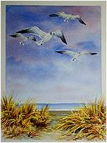 Seagulls, Original Seascape watercolor painting by Varvara Harmon